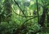 العاب بازل حديقة الحيوانات