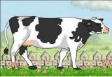 العاب توليد البقر